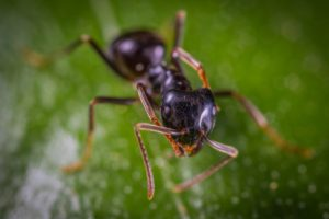 Effective Pest Control Tips For Your Home