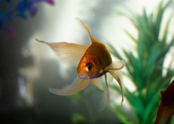 Easy Guidelines for Fish Tank Maintenance