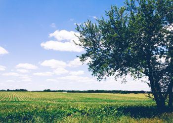 An Overview On Essential Tree Removal Services Today