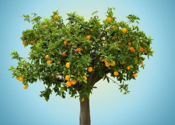 Keeping Your Trees And Shrubs In Excellent Shape