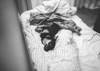 The Many Benefits That Dog Beds Offer – An Interesting Rundown