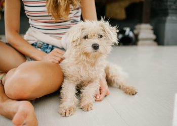 Managing Fleas And Ticks In Dogs – Effective Ideas You Should Definitely Try