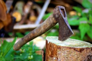 Discussing the Importance of Hiring a Tree Service – Easy Guidelines to Keep in Mind