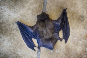 How to Get Rid of Bats Effectively – Simple Tips and Tricks to Try